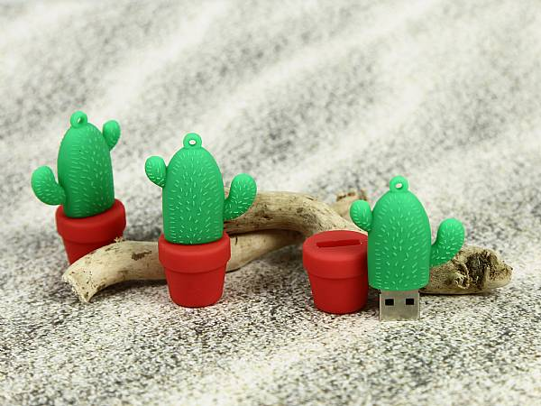 kaktus usb stick Kakteen, Pflanzen, Blume